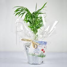 plante d駱olluante bureau plante de bureau personnalisée du bien être dans les espaces de