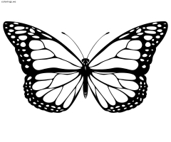 Cute Butterfly Coloring Pages For Kids
