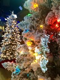 Bethlehem Lights Christmas Trees Recall by Friday Favorites Cij Style Blogs U0026 Forums