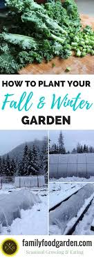 Download Free Picture Image For Profile Picture Plants In The Winter