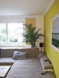 kentia palme howea