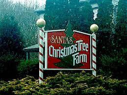 Santas Christmas Tree Farm For Sale In Cutchogue