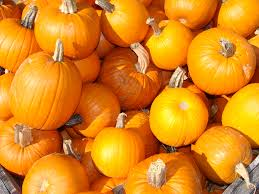 Myers Pumpkin Patch Facebook by Skelly U0027s Farm Market U2013 Growing Quality Produce Since 1989