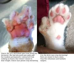 cost to declaw cat new york bill to ban declawing archives page 5 of 9 city the