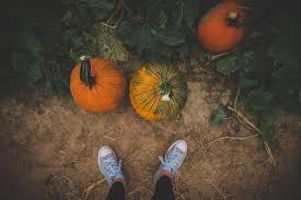 Pumpkin Farms In Belleville Illinois by Eckerts Pumpkin Pictures Belleville Il St Louis Family