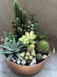 46 beautiful cacti concepts cacti ideas