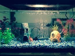 Spongebob Fish Tank Decorations by Our New Cute Spongebob Inspired Fish Tank Just Missing Patricks