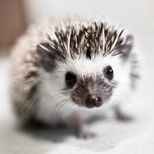 Porcupine Eating Pumpkin And Talking over the hedge baby porcupines google search cute characters