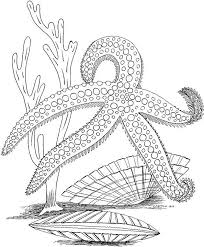 Pictures Ocean Coloring Pages For Adults 16 With Additional Kids