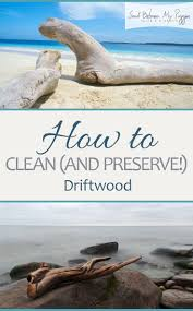 Driftwood Christmas Trees Devon by 895 Best Beach Images On Pinterest Shells Driftwood Ideas And