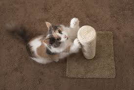cat stop how to stop your cat from scratching the furniture the cat site
