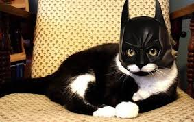 cat batman costume batman cat costume picture