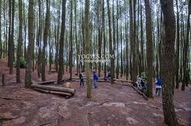 Hutan Pinus Imogiri Bantul 12 Tempat Wisata Gratis Ala Backpacker Di Jogja