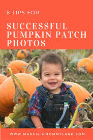 Bellevue Wa Pumpkin Patch by 86 Best Seattle Area Toddler Events Activities Images On