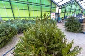 Christmas Tree In A Cart At Xmas Warehouse Market Stock Photo
