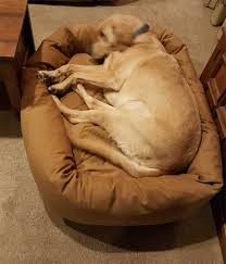 Eddie Bauer Dog Beds by Made In America Quality Dog Beds By Size Of Dog Lifetime Guarantee