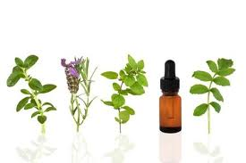 how to use essential oils for best possible results in lung healing