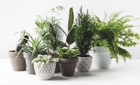 pflanzen fürs schlafzimmer ratgeber geheimtipps