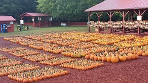Pumpkin Farms Southern Illinois by The Top 28 Farms For Fall Fun In The Us 2014 Funtober