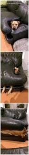 Llbean Dog Bed by Best 25 Dog Couches Ideas On Pinterest Dog Couch Cover Dog