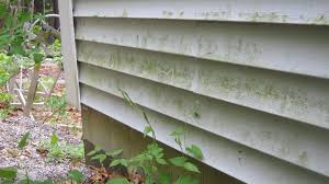 Cleaning Decking With Oxygen Bleach by Here U0027s The Dirty Truth About Vinyl Siding Silive Com