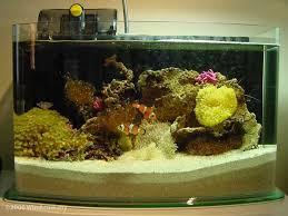 aquarium nano eau de mer 224 best aquarium d eau de mer images on aquariums
