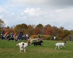 Pumpkin Festival Maine by 6 Dog Friendly Fall Events In Maine That Your Harvest Hound Will