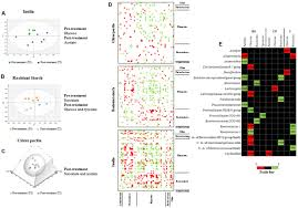 To Shed Light On Something Synonym by Frontiers How To Feed The Mammalian Gut Microbiota Bacterial