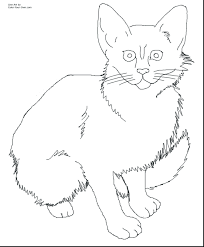 Superb Realistic Cat Coloring Pages Kitten Pictures Of Cream Colored Kittens To Color And Print