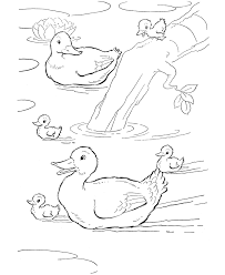 Coloring Pages Of Ducks