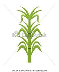 Sugar Cane Isolated Icon Design