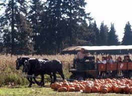 Canby Pumpkin Patch by The Best Pumpkin Patches In Oregon