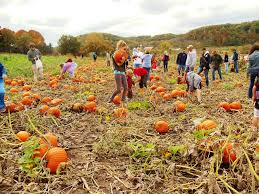 Pumpkin Patch Near Madison Wi by Harvesting Vermont Valley Community Farm Page 10