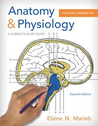 Marieb Anatomy Physiol Perfect And Physiology Coloring Book