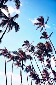 Palm Trees Drawing 60 17 676375 Tumblr Wallpapers Danasrhp Top 756x1138 H California Photography