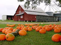 Kent Island Pumpkin Patch by North Carolina Pick Your Own Pumpkin Patches Funtober