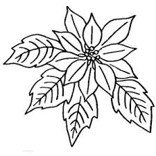 Poinsettia In Bloom Coloring Page