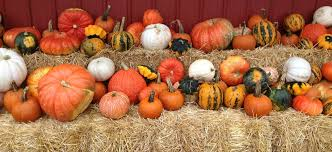 Leeds Pumpkin Patch Columbus Ohio by Central Ohio Farms And Orchards To Enjoy This Fall Central Ohio