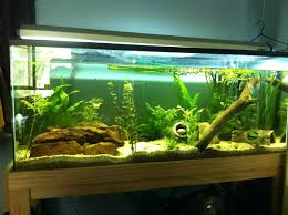 Aquarium Aquascaping Photo Planted Axolotl Tank Appartment Marine ... Home Accsories Astonishing Aquascape Designs With Aquarium Minimalist Aquascaping Archive Page 4 Reef Central Online Aquatic Eden Blog Any Aquascape Ideas For My New 55g 2reef Saltwater And A Moss Experiment Design Timelapse Youtube Gallery Tropical Fish And Appartment Marine Ideas Luxury 31 Upgraded 10g To A 20g Last Night Aquariums Best 25 On Pinterest Cuisine Top About Gallon Tank On Goldfish 160 Best Fish Tank Images Tanks Fishing