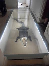 100 Glass Floors In Houses Creative On Twitter Glass Floor Covering An 8 Foot