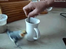 High Caffeine Parrot
