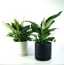 fice Ideas appealing office plant light pics fice Plant