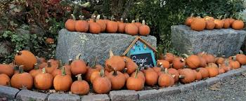 Pumpkin Patch Avon Ct by New England Fall Events A Ct Guide The Best Pyo Pumpkin Patches