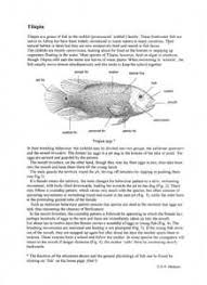 Fish Tilapia Biology Teaching Notes And Drawings By D G Mackean