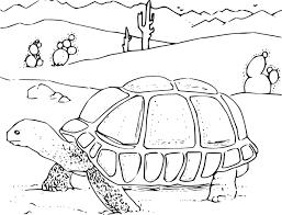 Coloring Book Desert Tortoise Clip Art at Clker vector clip