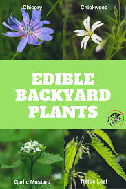 Edible Backyard Plants | Backyard Plants Southern Forager Spring Edible Plants In Middle Tennessee Eating The Wild Your Backyard Fixcom Landscapes Think Blue Marin Gulf Coast Gardening For Weeds And You Can Eat Remodelaholic 25 Garden Ideas Backyards Amazing Uk Links We Love Planting Plant Landscaping Sacramento Landscape Blueberries Raspberriesplants For Your Summer Guide Oakland Berkeley Bay Area Paper Mill Playhouse Yard2kitchen 197 Best Edible Wild Plants Images On Pinterest Survival Skills