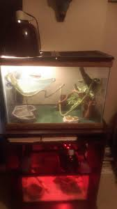 African Dwarf Frog Shedding Or Sick by We Have An Iguana That Her Skin Looks Bad We Keep Her Home At 90