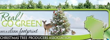 Sugar Or Aspirin For Christmas Tree by Christmas Tree Selection And Care Tree Recycling Wctpa