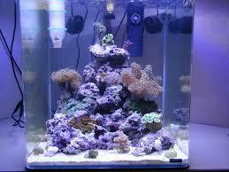 aquarium nano eau de mer photos aquarium eau de mer