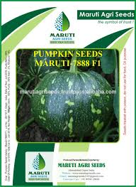 Pumpkin Seed Oil Capsules India by High Yield Pumpkin Seeds High Yield Pumpkin Seeds Suppliers And